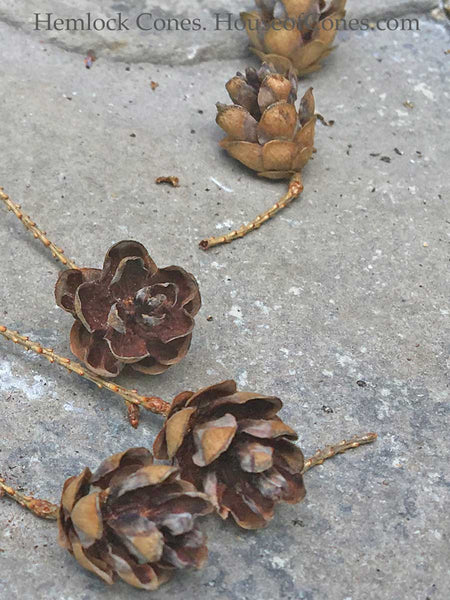 mini pine cones for floral accents