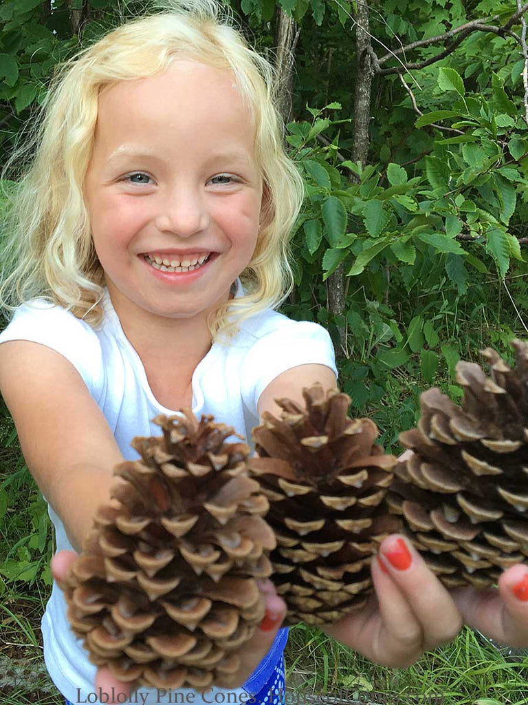 Medium pine cones in girls hand