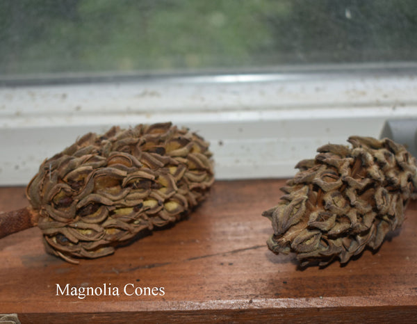 unique pine cones