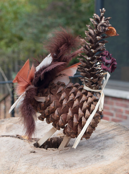 Pine Cones for crafts and Thanksgiving