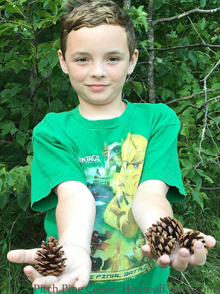 Small pine cones in hands