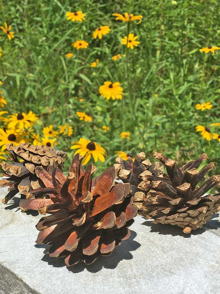 pine cones for wedding accents