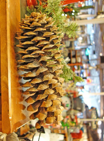Giant Sugar Pine Cones over fifteen inches long