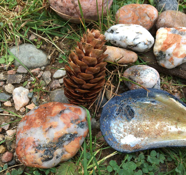 natural pine cones with sea shells and rocks