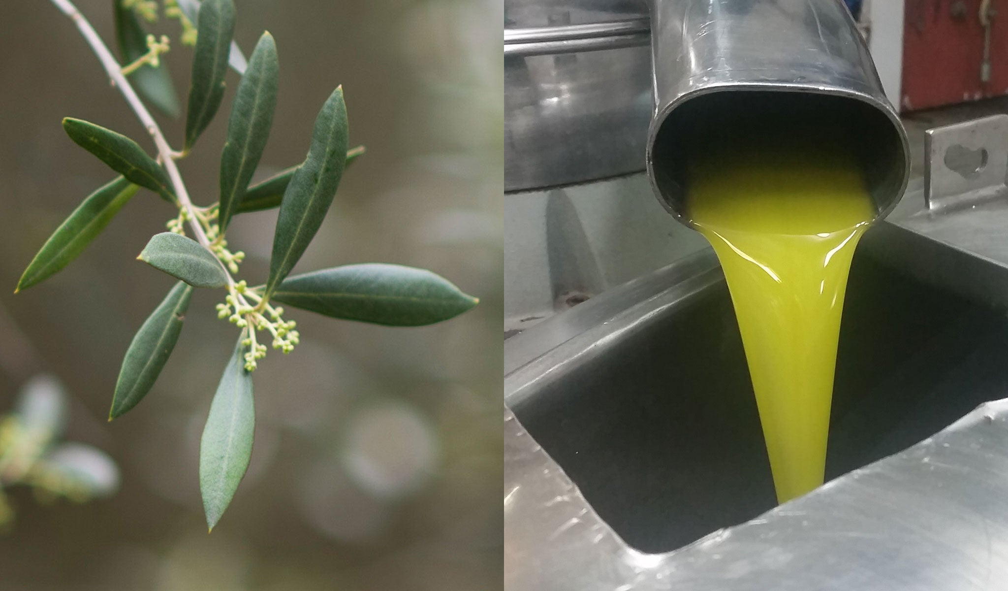 Choosing the best olive oil for freshness and flavour