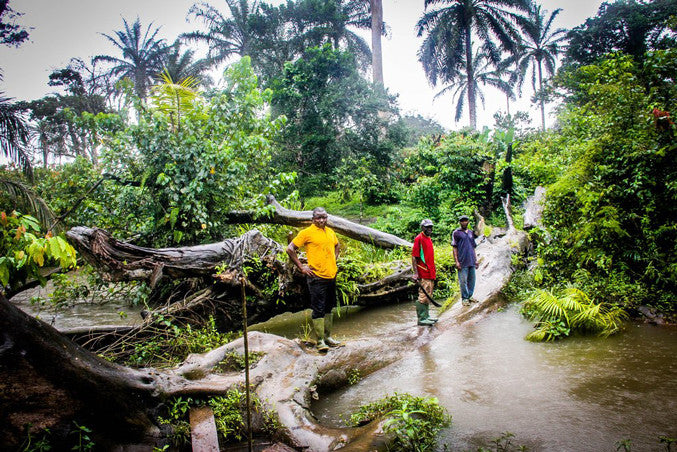 Moka staff members pictured on a large fallen tree trunk during wet season