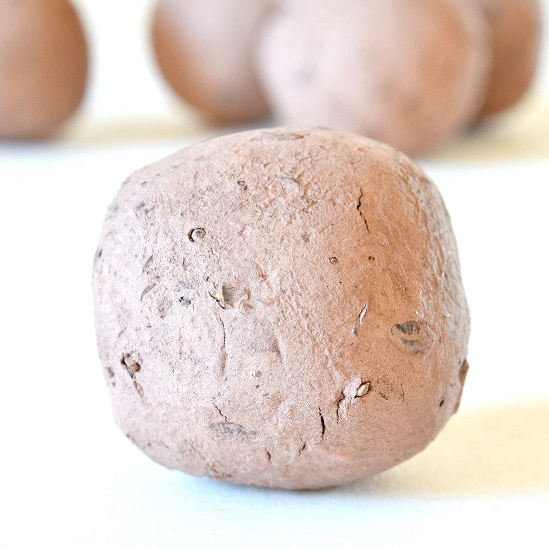 BEE BENEFICIAL BUG SEED BOMBS