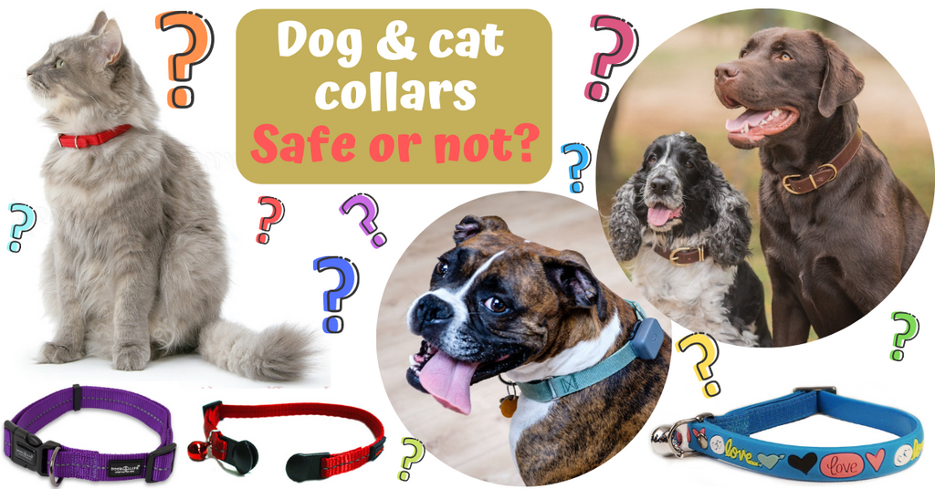 dangers of pet collars and safety advice