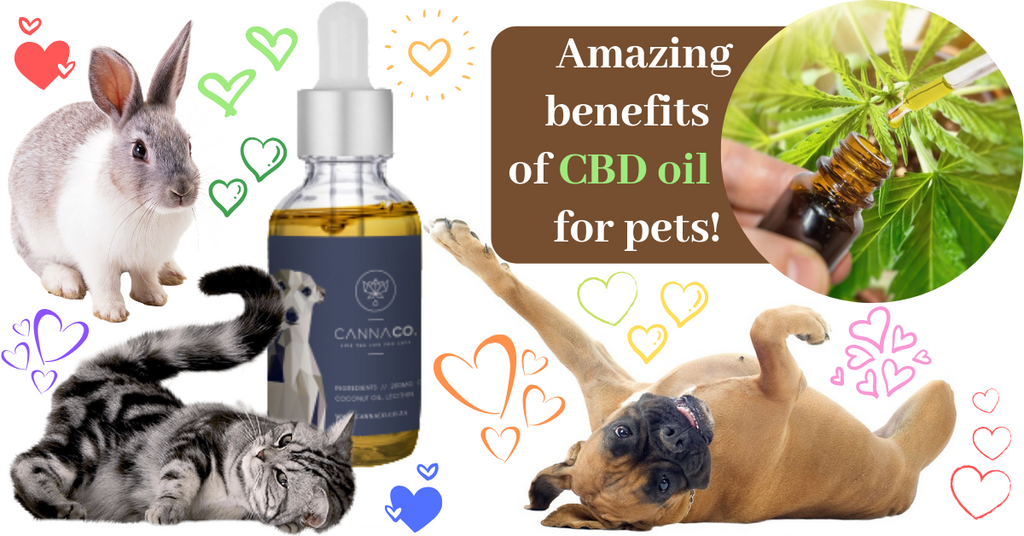 Health benefits of CBD oil for pets