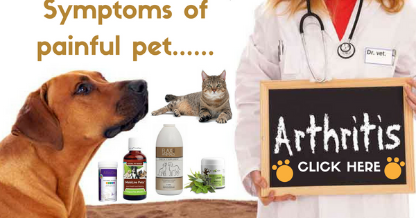 How to treat arthritis in pets naturally?