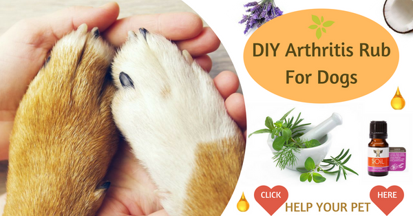DIY Rub for Arthritis in Dogs