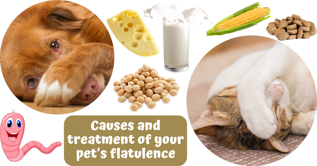 causes natural treatment pets flatulence gas