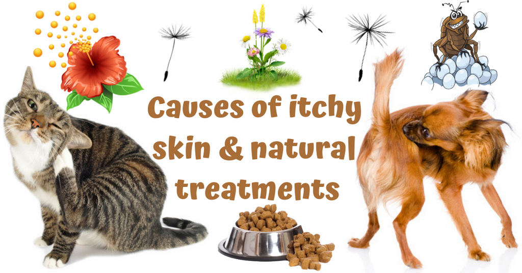 causes of itchy skin disorders in pets and natural treatments