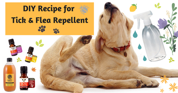 DIY recipe for tick and flea repellent for dogs