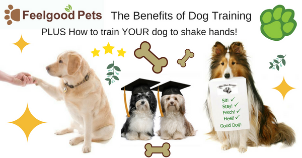 Dog Tarining: How to train your dog to shake hands
