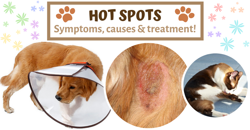 signs symptoms causes natural treatment pet hot spots
