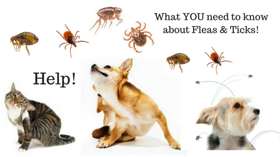 Natural Ticks and Fleas control