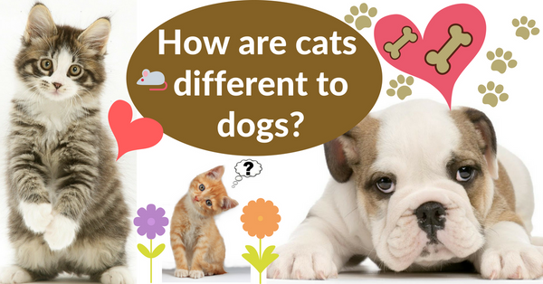 How are cats different to dogs?