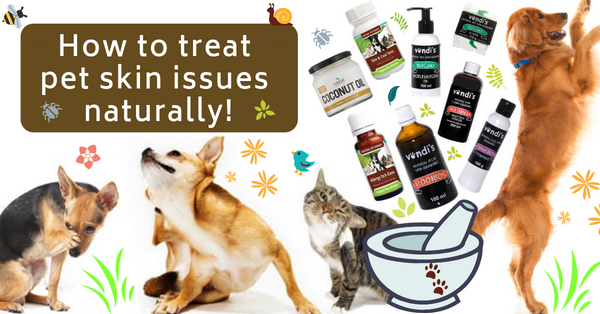 How to treat skin allergies in pets naturally