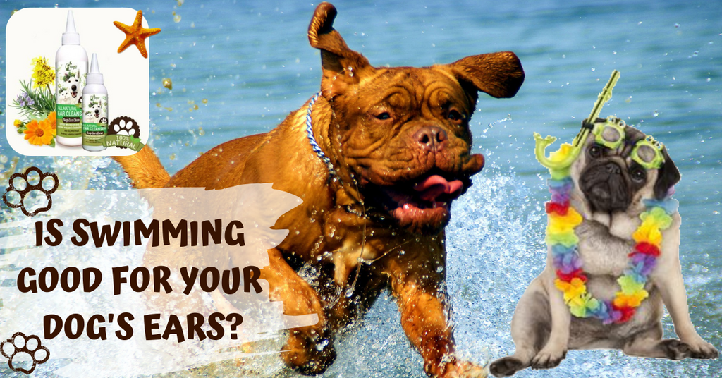 is swimming good for your dogs ear health