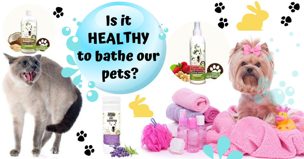 Is it healthy to bathe dogs cats rabbits horses pets how often