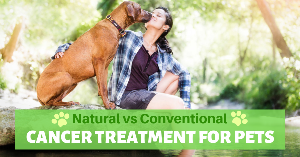 natural alternative conventional cancer treatment pets animals