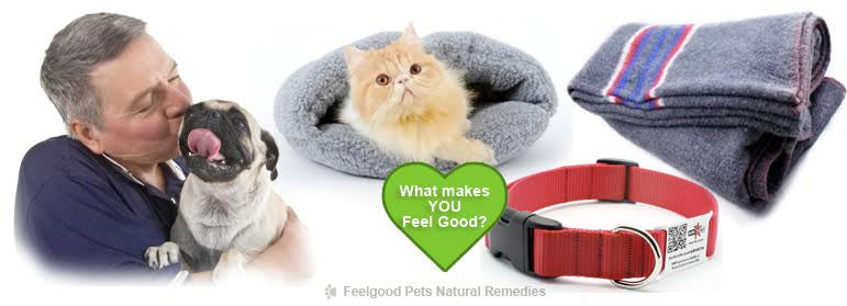 How to keep your Pet snug, safe and warm this Winter!