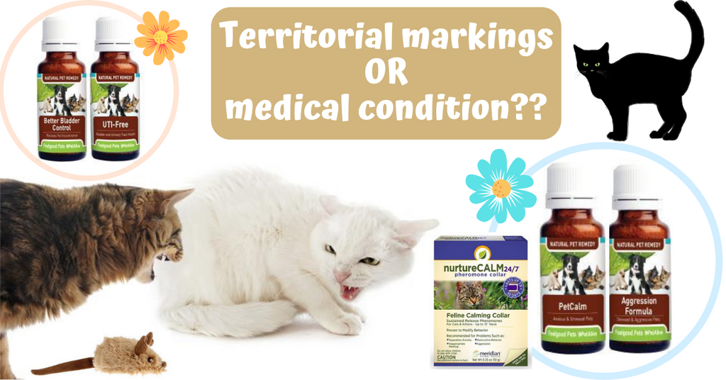 territorial marking spraying feline cat medical condition