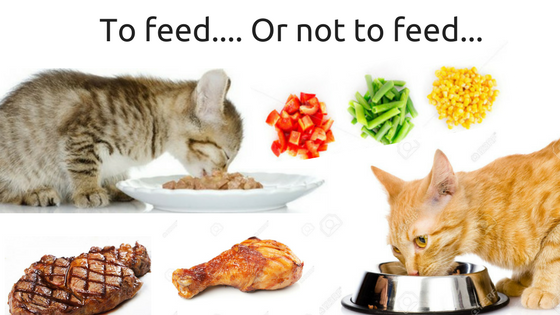 People fodds cats CAN and CAN'T eat: Here's what you need to know!
