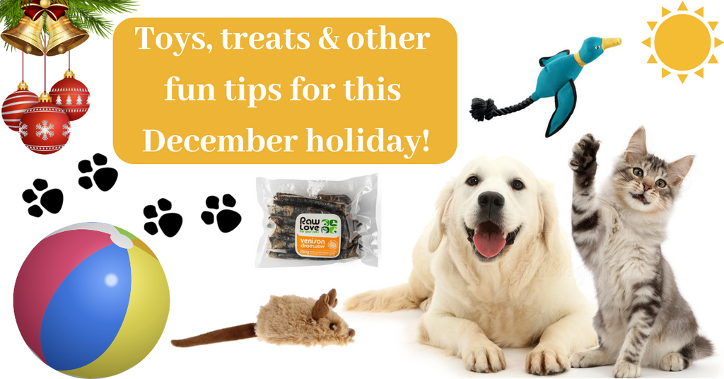 Toys treats top tips summer december holidays pets dogs cats