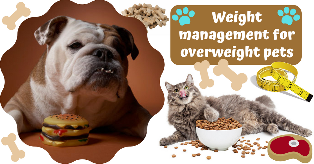 pet obesity overweight lose weight management