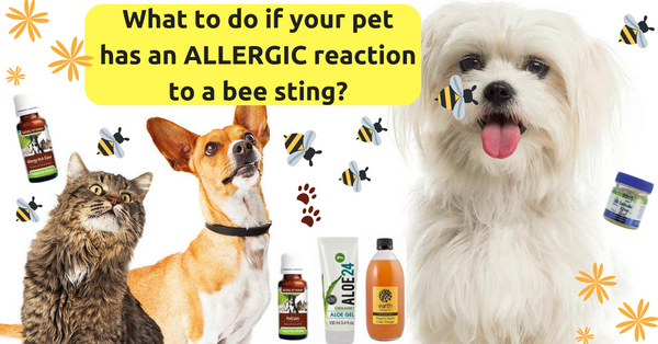 What to do if your pet has an allergic reaction to a bee sting!