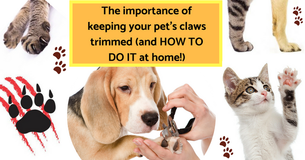 Pet Nail Clipping - Vital Health Benefits You didn't know about!