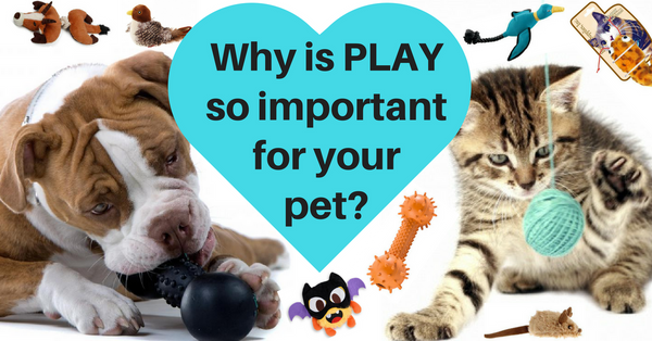 Why play is so important for your pet, how play can teach your pet, the health benefits of play for your pet, do cats also need playtime