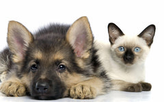 Cute healthy dog & cat