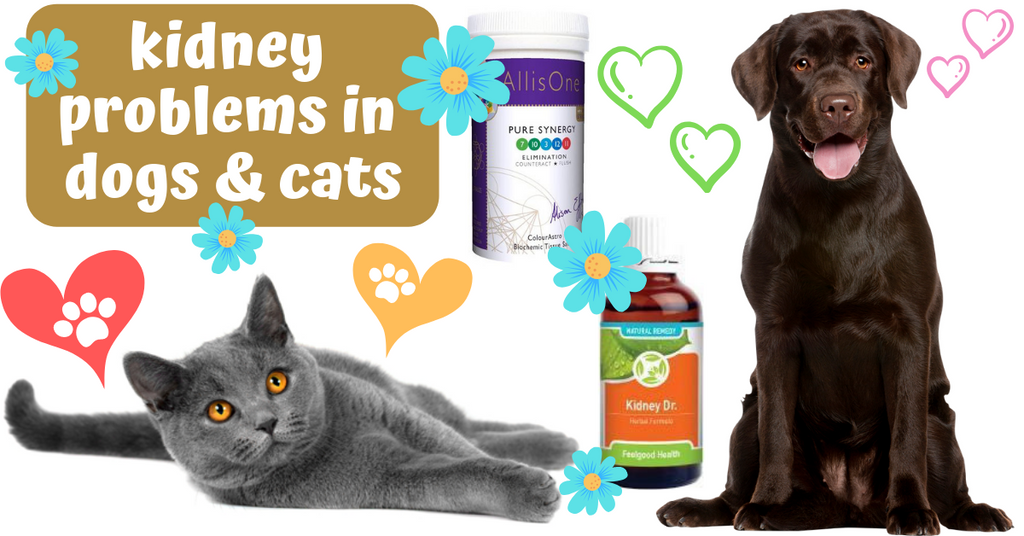 causes symptoms treatment kidney problems dogs cats