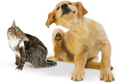 Itchy skin allergies in dogs & cats