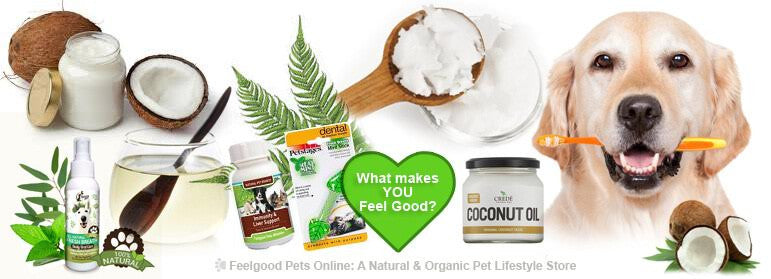 How to use Coconut Oil to keep YOUR dog's mouth and teeth fresh, clean & healthy! PLUS a FREE Coconut Oil oral health recipe & great Subscriber Only Discounts!