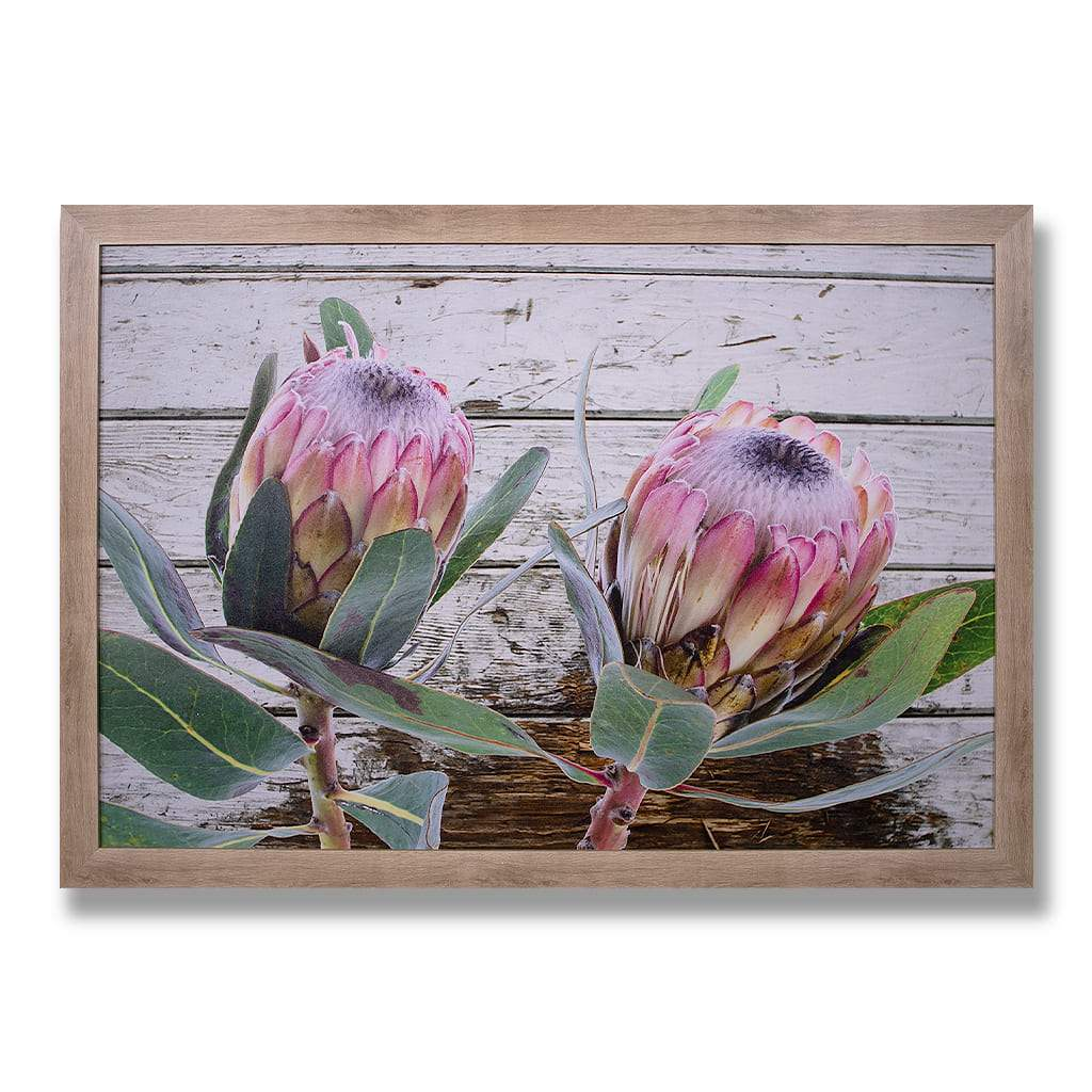 Twin Proteas Painting | Leather Gallery
