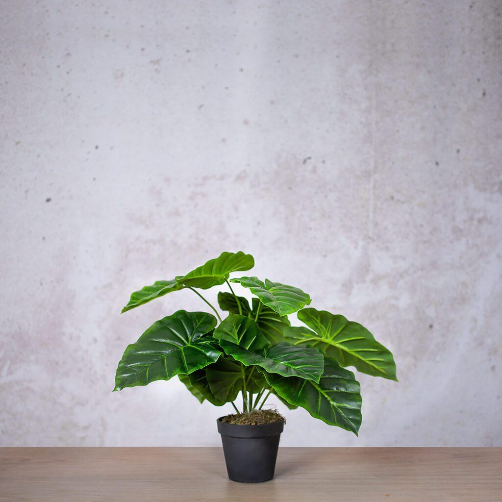 Faux Mini Elephant Ear | Plant | Leather Gallery