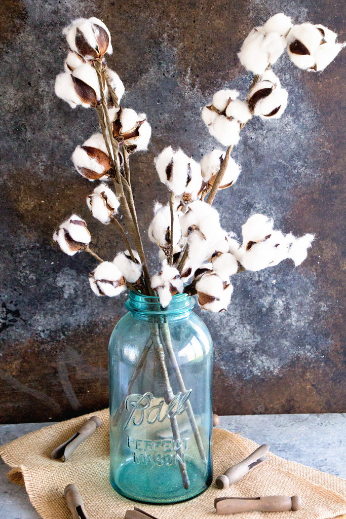 Cotton Stem Bundle