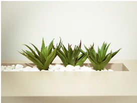 Outdoor Aloe Vera Cast Stone Planter