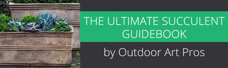 The Ultimate Succulent Guidebook by Outdoor Art Pros