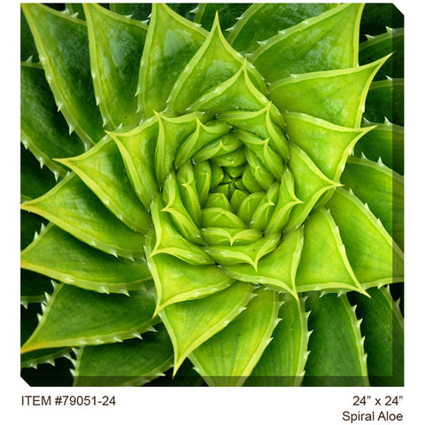 Spiral Aloe Outdoor Canvas Art - Outdoor Art Pros