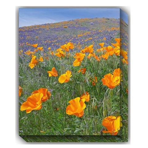 California Poppies Outdoor Canvas Art