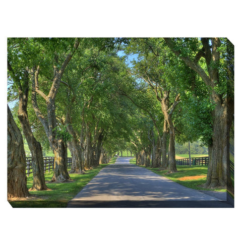 Country Lane Outdoor Canvas Art - Outdoor Art Pros