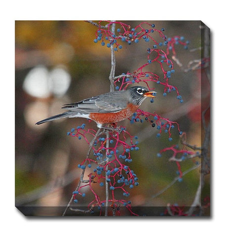 Robin In Autumn Outdoor Canvas Art