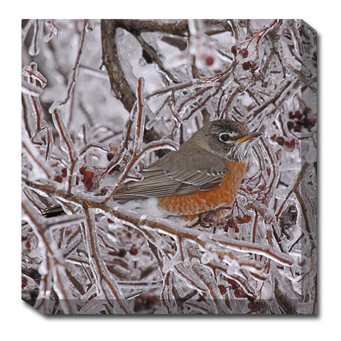 Robin in Ice Canvas Wall Art