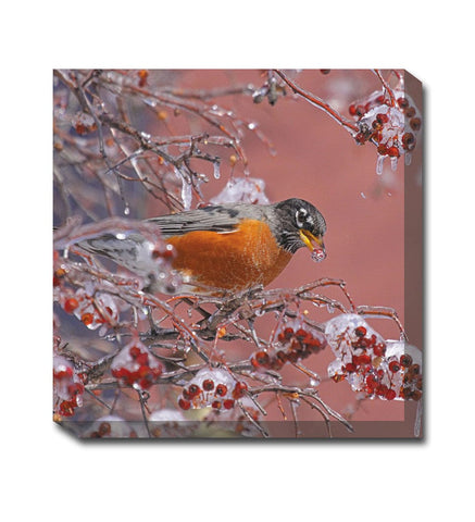 Robin with Berry Canvas Wall Art
