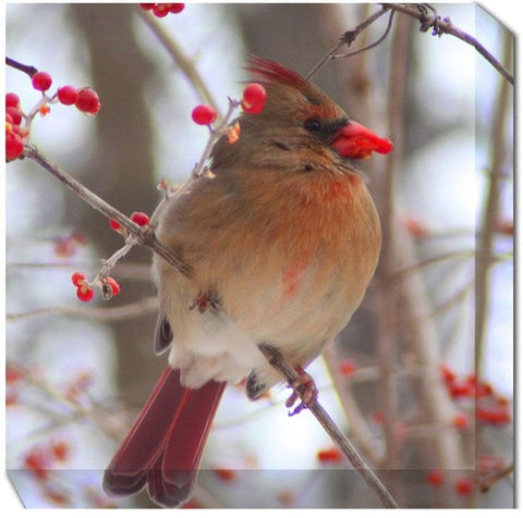 Winter Cardinal Canvas Art